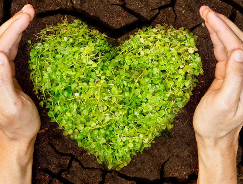 Restauración de suelos degradados: 5 principios básicos