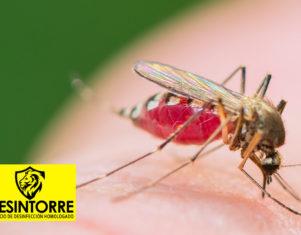 DESINTORRE: Los mosquitos y el verano