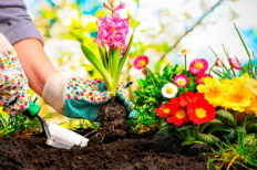 ¿Cómo mantener tu jardín de forma sostenible en verano?