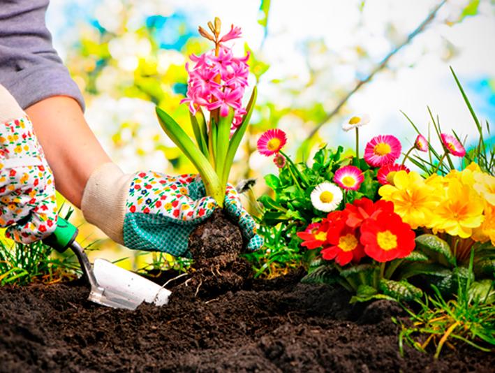 Cómo mantener tu jardín de forma sostenible en verano
