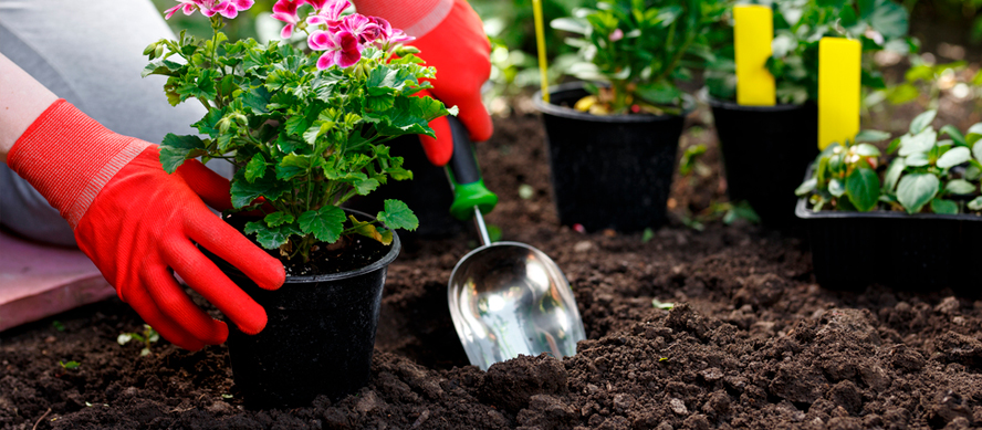 5 criterios para elegir las plantas