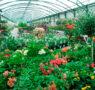 Cómo elegir las plantas en un vivero